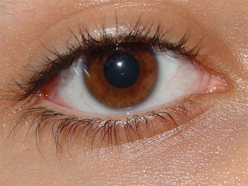 Hvad gemmer dine øjne på?